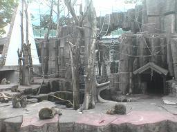 円山動物園 サル山.JPG