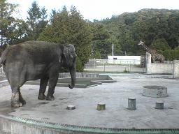 円山動物園 ゾウとキリン.JPG